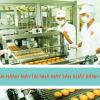 Tuyển gấp lao động vận hành máy trong nhà máy sản xuất bánh mỳ.
