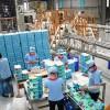 Xuất khẩu lao động Đài Loan – Nhà máy sản xuất giấy Cẩm Long