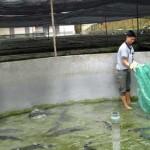 Đơn hàng giúp việc Đài Loan làm việc tại trang trại nuôi cá.