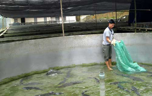 Giúp việc Đài Loan làm việc tại trang trại cá